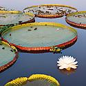 Central & South America: Plants, Habitats & Landscapes