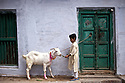 Bakra Eid is also known as the &quot;Festival of Sacrifice&quot; in the Muslim world, a celebration commemorating Abraham's willingness to sacrifice his son. Since God provided a ram in his place, a goat is sacrificed in memorial of this event.