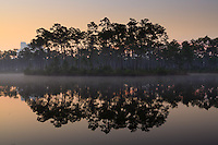 The sky brightens above morning fog around an island of slash pines in the pond at Long Pine Key campground in Everglades National Park, Florida.