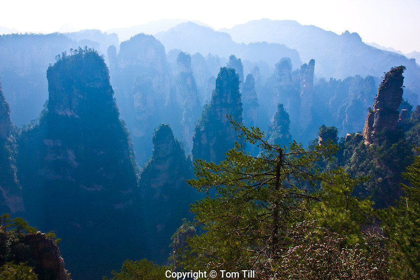The Front Garden.Rock pinnacles in Zhangjiajie National Forest Park,.People's Republic of China.Wulingyuan National Park UNESCO WHS.Rock formations of  quartz-sandstone
