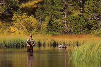 Weir Lake Fly Fisherman Close View -  Fall Color