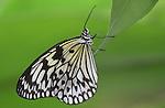 Butterflies/Bees