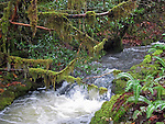 a rushing river cascading through a deep green and wet forest with rain forest touches like branches crossing the river draped in moss, breaking water
