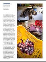 Story in Scuba Diver Australasia on the mobulid ray trade in Sri Lanka. We followed the work of scientist Daniel Fernando of the Manta Trust.