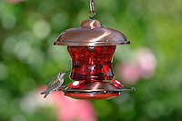 Brushed Copper and Ruby Glass Hummingbird Feeder; Southern California