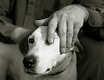 A man stroking the head of a white dog.<br /> [This photograph is currently licensed through Millennium Images - please contact the photographer for details]