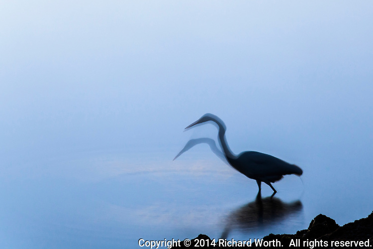 An egret in silhouette at dusk on the shores of San Francisco Bay.