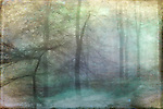 Forest shrouded in fog. Textured photography