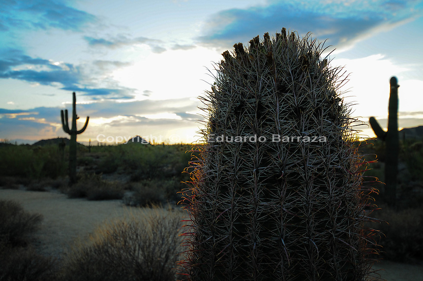 Mesa, Arizona. A view of the Usery Mountain Regional Park at sunset. The sun light baths the cacti on this summer's afternoon. Photo by Eduardo Barraza © 2015