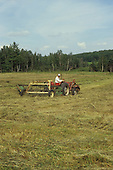 raking hay in field