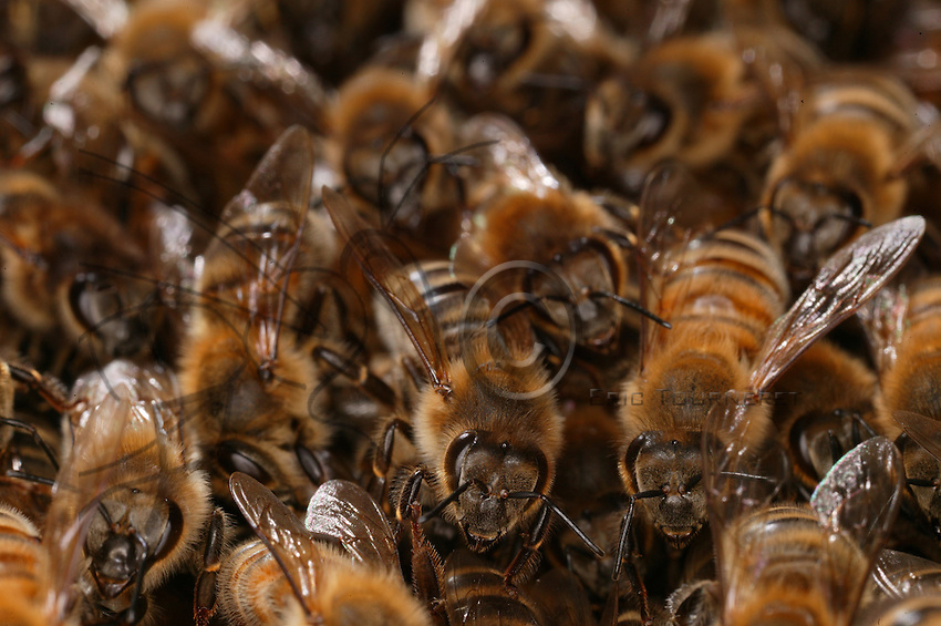 Multitude. A healthy colony counts about 40,000 bees of all ages during the active season. 300  to 400 workers die everyday, all the bees of a bee hive are thus replaced over a period of four months.