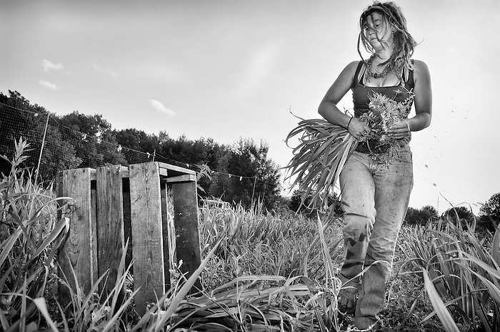 Liz Roberts, a young farmer picking organic garlic on Keith's farm in Port Jervis, New York