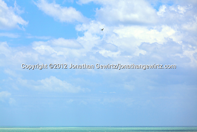 A Frigatebird soars over Biscayne Bay on the Atlantic Ocean coast, Miami, Florida.