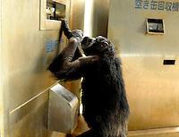 Japan Clever Chimpanzee