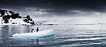 Gentoo penguins on an iceberg float, Antarctica<br /> <br /> Please call 888-973-0011 or email info@artwolfestock.com to license this image directly.