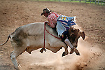 A rodeo clown takes a ride on a bull backwards.  Mt Garnet Rodeo, Mt Garnet, Queensland, Australia
