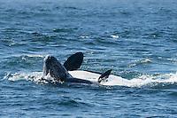 Monterey Bay ORCA Predation