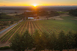 Evening Land's Seven Springs Vineyard, Eola Hills, Willamette Valley, Oregon