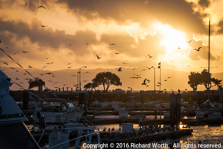 As if on cue, gulls took to the air in simultaneous disarray - winged silhouettes against clouds drenched in the setting sun light.