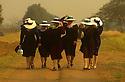 Bolivia Mennonites