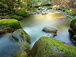 Idaho, North, Coeur d'Alene Forest, Coeur d'Alene. Beauty Creek flows through moss covered boulders before joining Beauty Bay of Lake Coeur d'Alene just downstream.