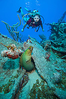 Savannah Goodman and a green moray.Wreck of The Rhone.Salt Island, BVI