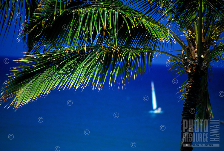 Palm tree with white sailboat on the blue ocean at Mauna Kea Beach