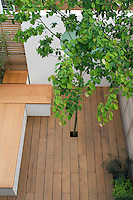 Elevated shot of the tree that provides year-round interest, shade and a focal point in the roof terrace