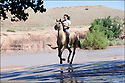 Arizona-Route 66<br /> Portrait<br /> Canyon de Chelly