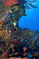 Coral Reef <br />