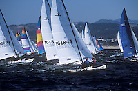 Hobie Cat Sailboats racing on Monterey Bay, California.
