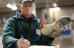 Foto: VidiPhoto<br /> <br /> NIEUWEGEIN - In de Beursfabriek in Nieuwegein is donderdag de zogenaamde Champion Show voor kleindieren als konijnen, kippen, duiven, ratten, cavia's en watervogels van start gegaan met de keuring van de dieren door meer dan 60 keurmeesters. De driedaagse Champion Show is met bij 7000 dieren en 4 km. aan kooien de op &eacute;&eacute;n na grootste dierenshow van Nederland, met deelnemers uit heel Europa. Omdat Nederland in Europa de beste fokkers heeft, is er publieke belangstelling uit tal van landen voor het evenement. Zo komen buitenlandse fokkers speciaal naar Nieuwegein om er fokmateriaal aan te schaffen. Zo'n 1100 dieren staan te koop. Bijna duizend kleindierenfokkers proberen met hun inzending landelijk kampioen te worden. Het ledenbestand is flink aan het vergrijzen. Minder dierenfokkers betekent echter ook de kans op het uitsterven van bepaalde oude en zeldzame rassen. De kleindierenshow in Nieuwegein is tot en met zaterdag geopend voor het publiek. Zaterdag worden voor het eerst de Internationale Hanenkraai Kampioenschappen gehouden.