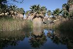 McCallum Grove, Coachella Valley Preserve, CA