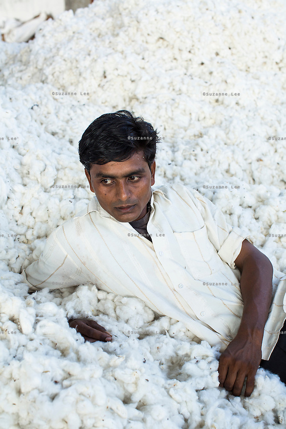 Labourer Shyam Takre, 25, takes a rest in the mountain of raw Fairtrade cotton after unloading it from a truck at a ginning factory that is contracted by Pratibha in Karhi, Khargone, Madhya Pradesh, India on 12 November 2014. Photo by Suzanne Lee for Fairtrade