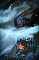 &quot;Grounded Amidst the Flow&quot;<br />