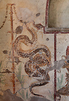 Fresco of a snake, possibly the god Agathodaimon at a lararium niche, a shrine dedicated to the guardian spirits of the household, at the entrance to the triclinium in the Casa dell Efebo, or House of the Ephebus, Pompeii, Italy. This is a large, sumptuously decorated house probably owned by a rich family, and named after the statue of the Ephebus found here. Pompeii is a Roman town which was destroyed and buried under 4-6 m of volcanic ash in the eruption of Mount Vesuvius in 79 AD. Buildings and artefacts were preserved in the ash and have been excavated and restored. Pompeii is listed as a UNESCO World Heritage Site. Picture by Manuel Cohen