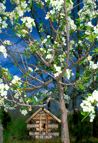 Log cabin birdhouse in blooming crabapple