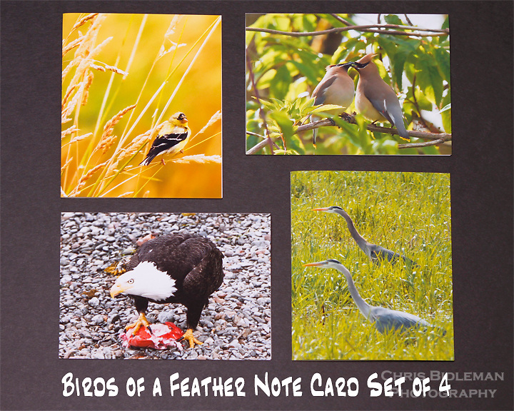 "Birds of a Feather note cards.  Set of 4 cards that are 4.25"" x 5.5"" in size.  Blank inside and includes mailing envelope."