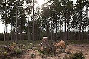 TLC Logging