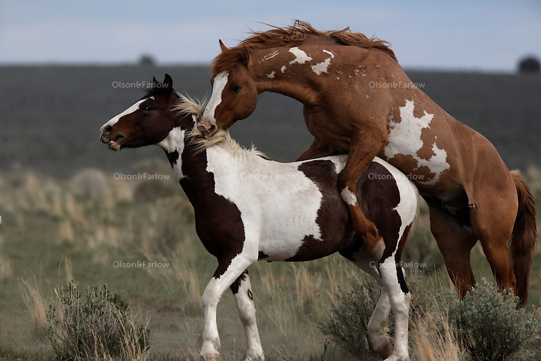 Mustang horse painting - photo#13