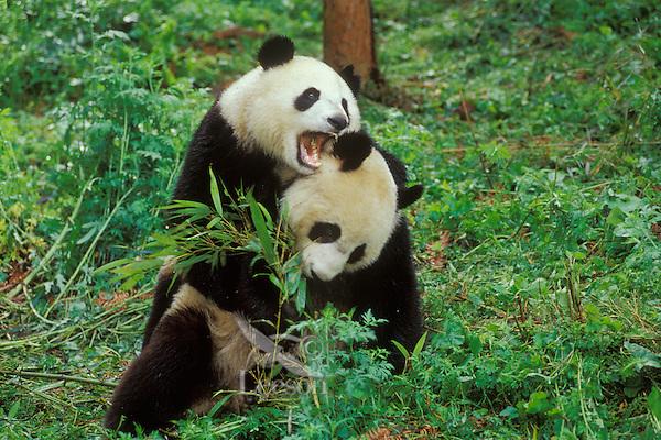 wwf panda forest - photo #37