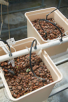 Hydroponic growing of vegetables using lava rock, hoses, tubes, technology and scientific methods of plant culture