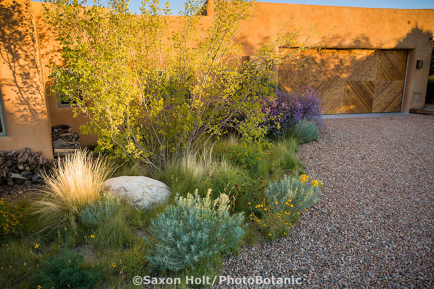 Wide view - Naturalistic xeriscape low water use meadow landscaping in New Mexico  by  gravel driveway and pueblo home