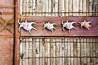 Trochus shells decorate the wall of a traditional Men's House in Yap. Men and women can gather in their own separate communal housing during the day.  The traditional house is actually far more than a place to gather, the building and maintenance and use of the house is integral to the passing on of skills and culture from one generation to another, Yap Micronesia. (Photo by Matt Considine - Images of Asia Collection)