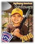 2016 Burlington American Sunflowers