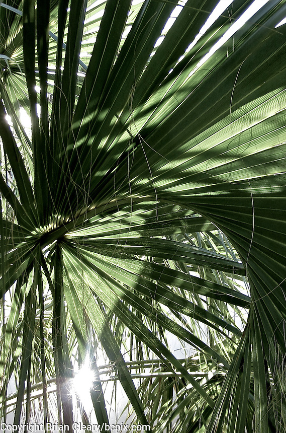 A palm frond and its shadows near the Halifax River, Holly Hill, Florida.  (Photo by Brian Cleary/www.bcpix.com)