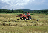 raking hay in field with MF  tractor