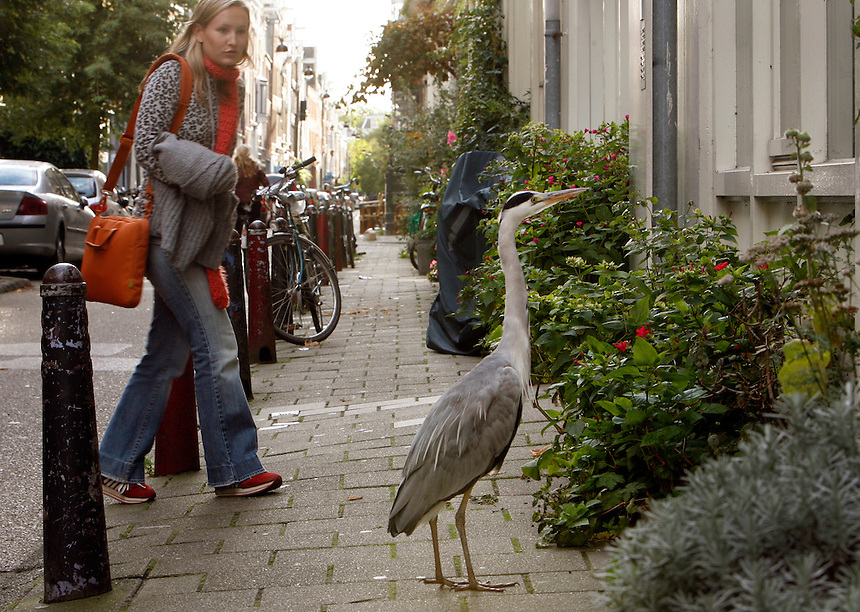 Via Osgood approaches a heron that lives in the neighborhood and looks for a hand-out.