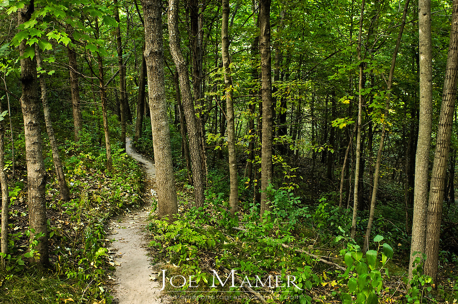 A hiking trail through lush, green mixed forest in central Minnesota.