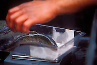 A Nothern Michigan University graduate student weighs a Tobin Harbor-strain coaster brook trout from a hatchery before planting it in the Hurricane River in Pictured Rocks National Lakeshore near Grand Marais, Mich.